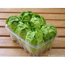 Salade sucrine par 6