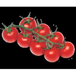 Tomates cerises grappe